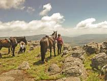 © Kaapsehoop Horse Safaris